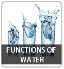Function of water