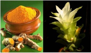 Queen of Spices Turmeric