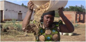 WHO OWNS SEEDS? IS IT FARMERS OR INDUSTRIAL GIANTS?