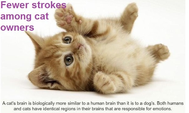 Fewer Strokes among Cat Owners