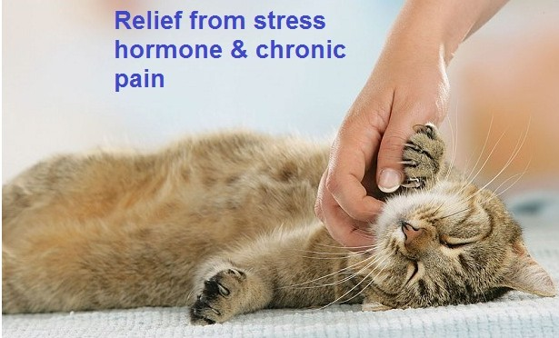 Relief from that Chronic pain