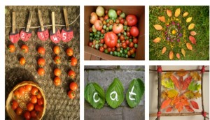 Fun with fruits, flowers and leaves