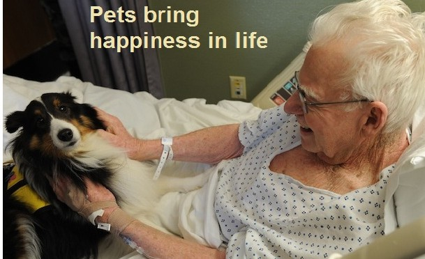 Pets are Natural mood Enhancers!