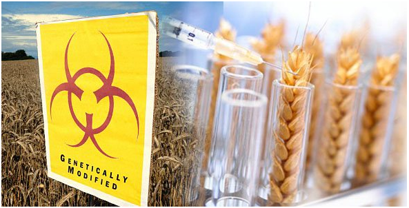 A farmer's view: What to know about GMO