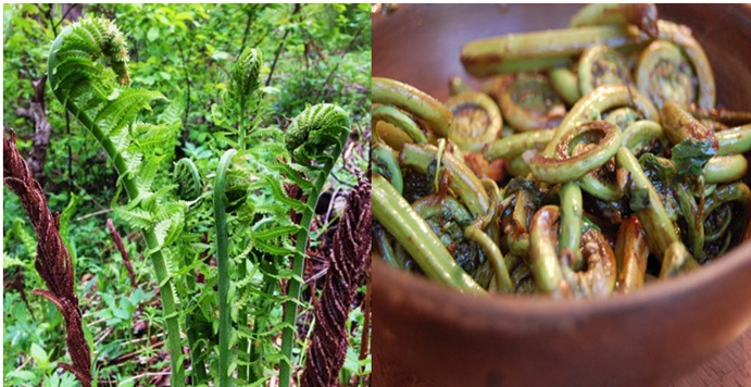 Edible Fiddlehead fern