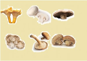 The six most common types of edible mushrooms