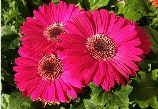 Flowering Air Purifiers