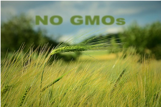 Scotland Completely Bans GMO Crops !