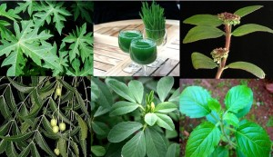 DENGUE FEVER AND NATURAL REMEDIES