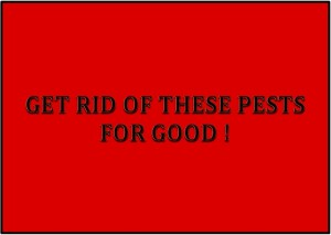 GET RID OF THESES PESTS FOR GOOD