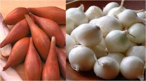Shallots & Pearl onions