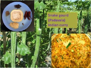 SNAKE GOURD (PADAVALA) INDIAN CURRY