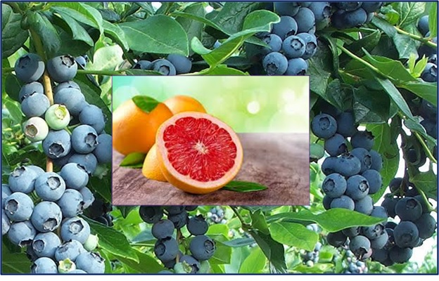 Grapefruits & Blue berries