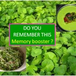 MEMORY BOOSTER: GOTU KOLA (ONDELAGA, TIMIRE) DISHES