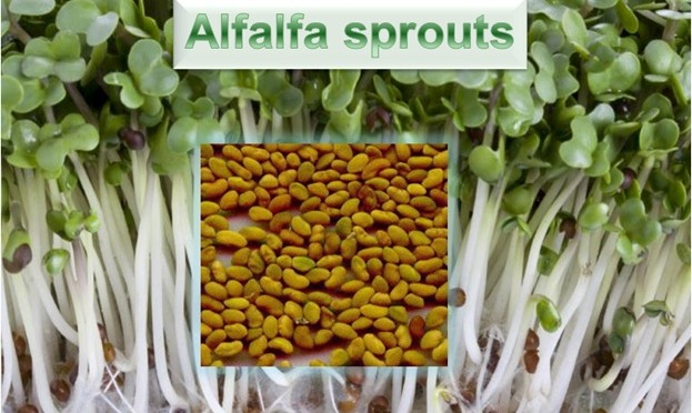 an analysis of alfalfa sprouts