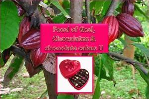 Food of God , Chocolate & Chocolate cakes