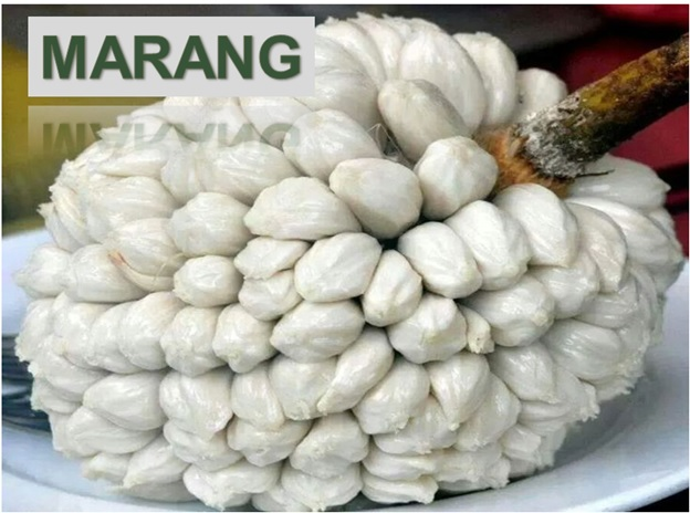 Marang - Click here to Read