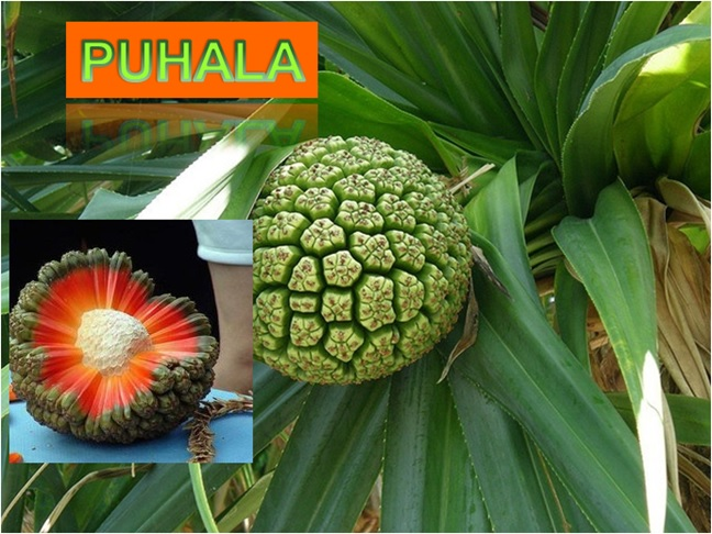 Puhala - Click here to Read