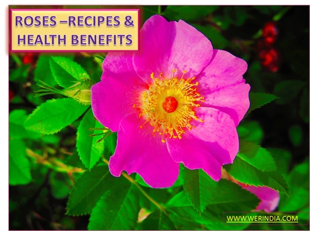 CULINARY USE OF ROSE AND ITS BENEFITS