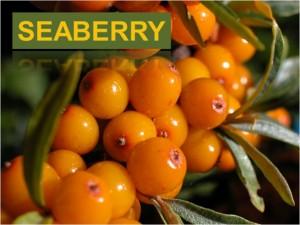SeeBerry