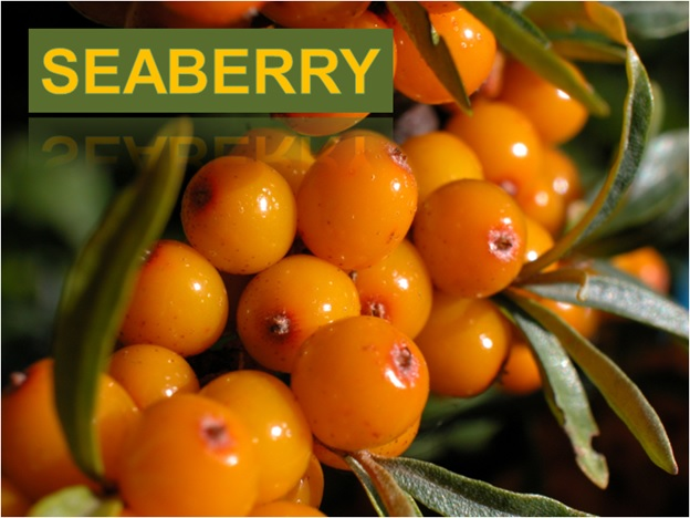SeaBerry - Click here to Read