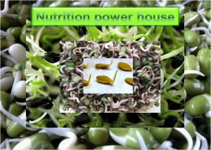 Seed Sprouts - Nutrition Power house