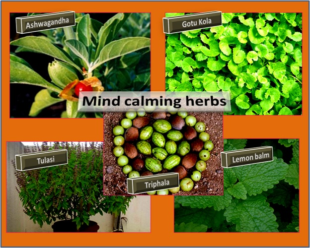 Herbs that help to calm mind