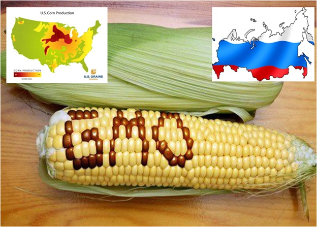 Russia Bans U.S. Corn and Soybean Imports Because Of GMO Contamination