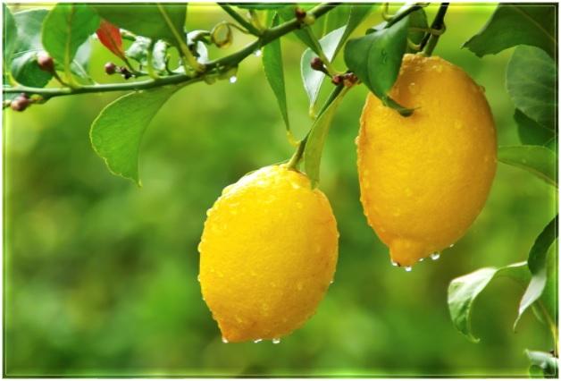 Healthy Food - Lemons