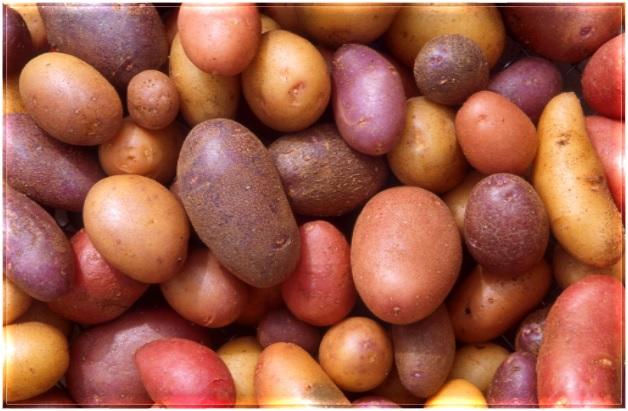 Healthy Food - Potatoes