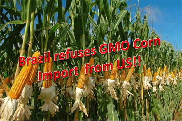 Brazil Refuses All Imports of U.S.- Grown Genetically-Modified Crops