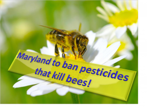 Maryland will ban pesticides that kill Honey bees
