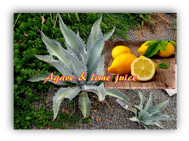 Lemon-Agave Wrinkle Fighter For Wrinkled Skin