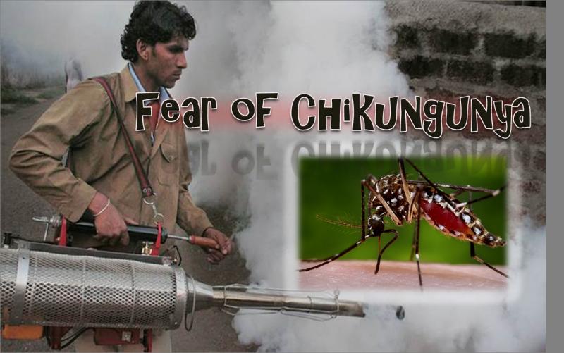 Fear of Chikungunya