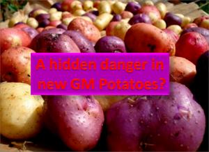 GM potatoes