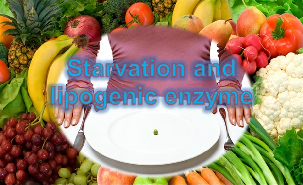 Lepogenic enzyme and starvation