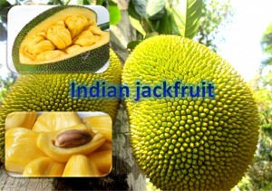 Indian Jackfruit