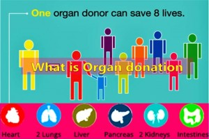 What is Organ Donation?