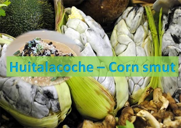 Huitalacoche - Corn Smut