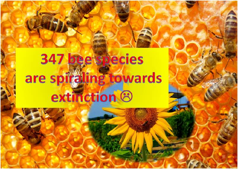 Bee Species are spiraling towards extinction