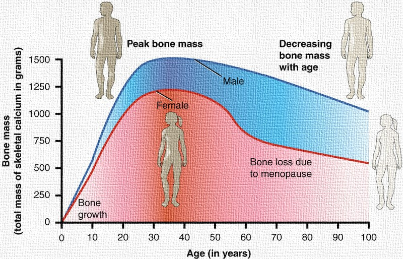 Bone health at Age 20s