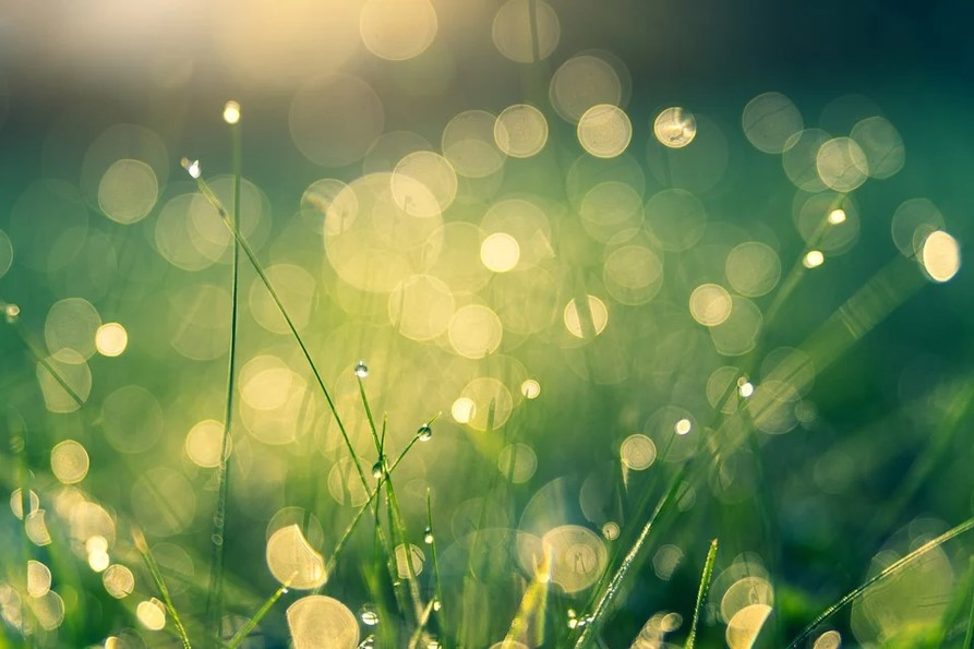 Vitamin D and Calcium play important role