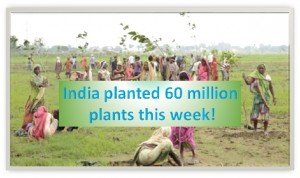 India planted 60 million plants this week!