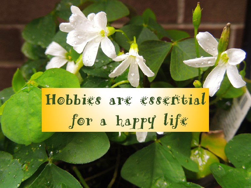Hobbies are essential for a happy life