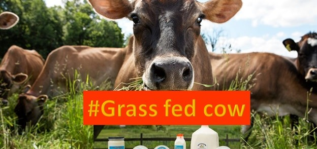 Grass fed cows are good