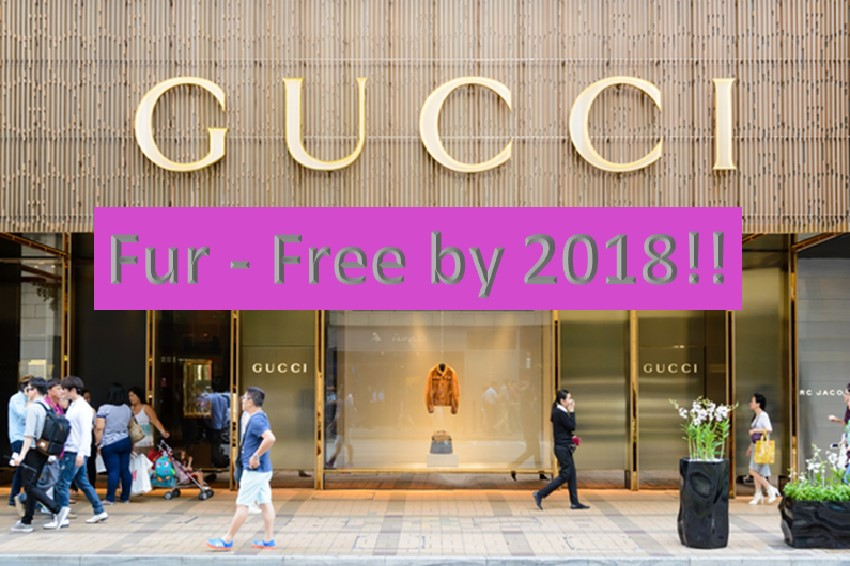 Gucci just announced fur free by 2018
