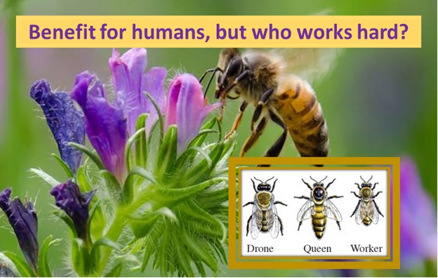 Who works hard? Bees!