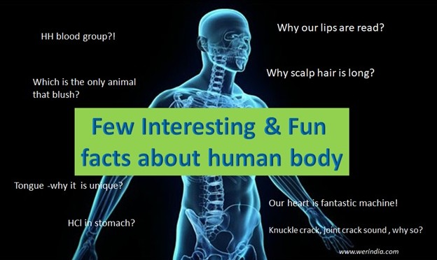 Interesting and Fun facts about Human body