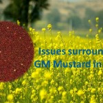 gmmustard-healthylife-werindia