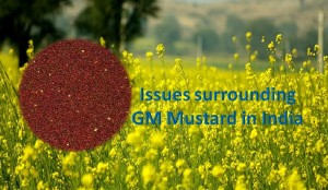 Issues surrounding GM Mustard commercialization in India
